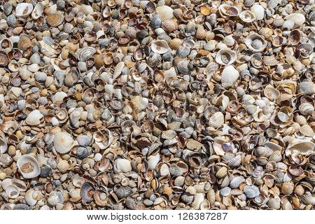 Seashells background. Many sea shells on a beach summer background. Small seashells and sand beach holiday background, summer backdrop.