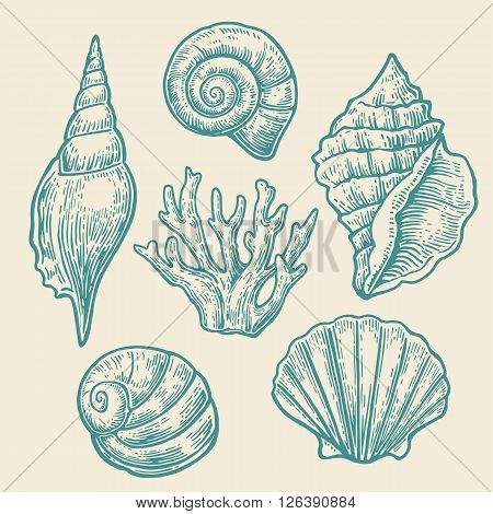 Sea shell. Set color engraving vintage illustrations. Isolated on white background
