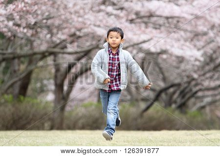 Running Japanese boy and cherry blossoms (first grade at elementary school)