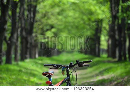 Wheel Mountain Bike And Sunglasses On A Trail In The Forest