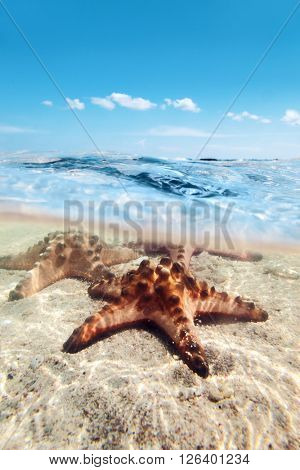 Split image of starfishes underwater, sunny day, blue sky