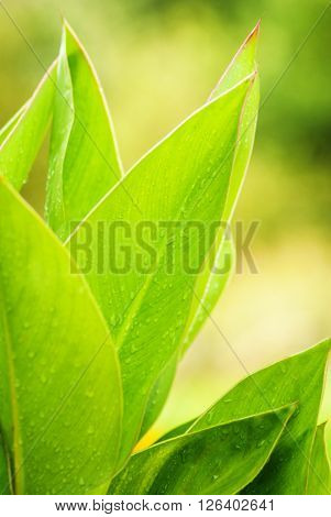 Big Green Flower Leaves