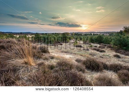 Sunset Over Heather And Sand On The Veluwe