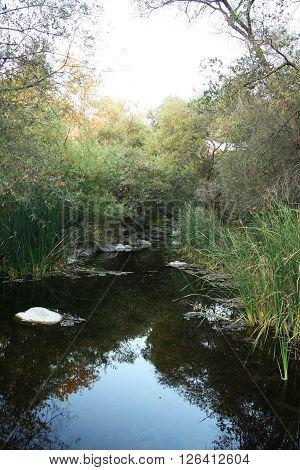 Still Mountain River (still river water against greenery).