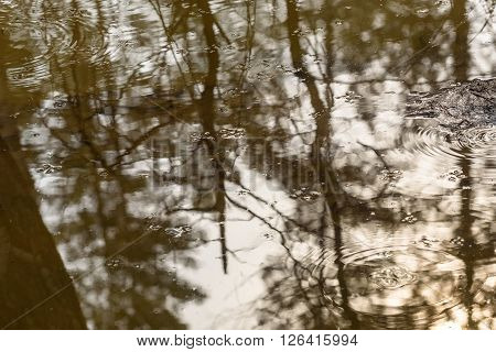 Abstract natural background with circles on the water water striders and reflections of trees in a puddle in the forest in early spring at sunset