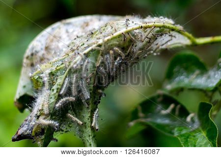caterpillar hatching on leaf spring rain with drops