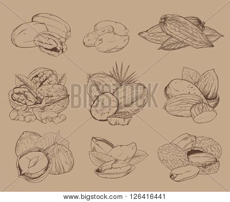 Isolated nuts on light brown background. Engraved bitmap illustration of leaves and nuts of pistachio, pecan, walnut, coconut, cocoa, hazelnut, almond, peanut. Mixed nuts.