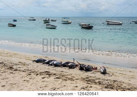 Fresh Tuna on the beach of Tamarin Bay in Mauritius
