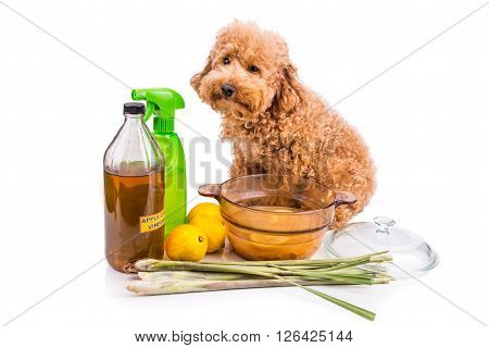 Apple Cider Vinegar, Lemon,  Lemongrass Effective Flea Repellent Home Formula