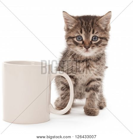 Kitten with coffee cup isolated on white