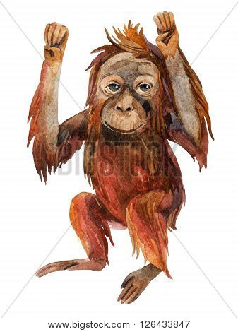 Orangutan baby. A little monkey holding his hands up. Watercolor hand painted illustration