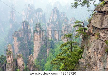trees on rocks in Zhangjiajie National Park in Hunan China