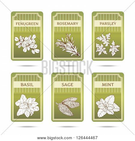 Collection of herbs. Hand drawn graphic illustrations. Set of labels with different herbs and spicy.