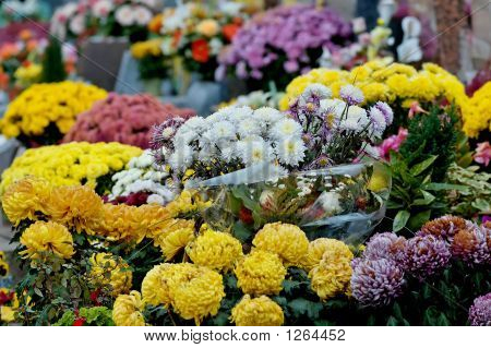Chrysanthemum On A Tomb