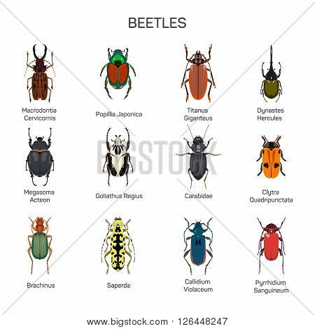 Bugs vector set in flat style design. Different kind of beetles insect species icons collection. Isolated on white background.