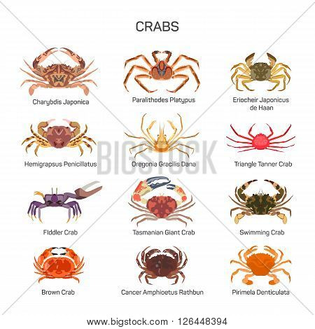 Crabs vector set in flat style design. Different kind of crab species icons collection. Crabs Isolated on white background.