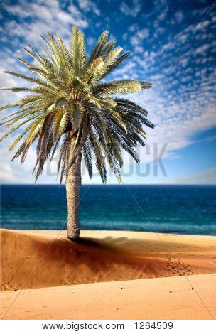 Vista hermosa playa con palmeras