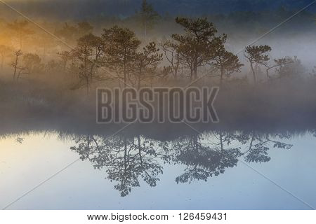 Sunrise in the bog with pine trees reflection