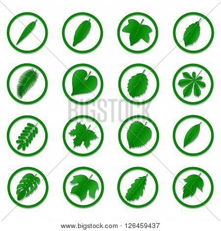 A diverse collection of green leaves in the form of icons