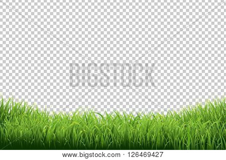 Green Grass Border, Isolated on Transparent Background