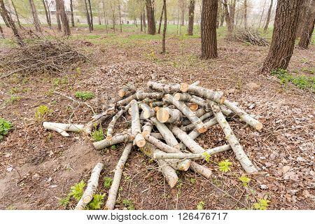 Heap Of Cut Wood