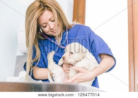 Veterinary checking a dog puppie in her studio