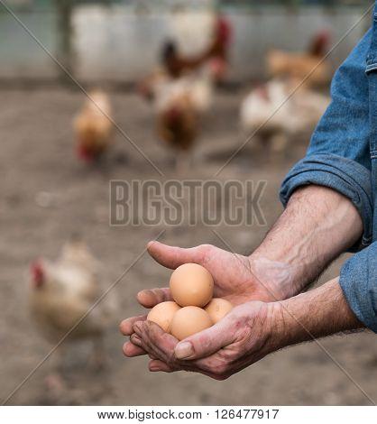 Farmer holding fresh organic eggs. Poultry yard