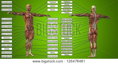 Concept or conceptual 3D human man anatomy and muscle for sport and text on green background