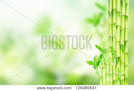 green bamboo stems with fresh leaves and  copy space  green bokeh background