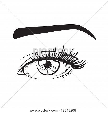 Woman eyes vector illustration hand drawn black lines on white isolated.
