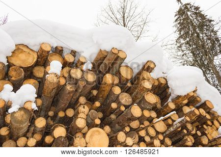 Stacked Wood Covered With Snow, Alps Austria In Salzburg