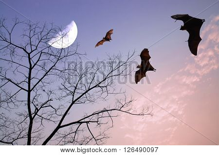 Bats silhouettes over beautiful branch and half moon as halloween background