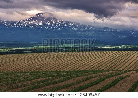 Pattern Green Field With Mountain Ranges Background