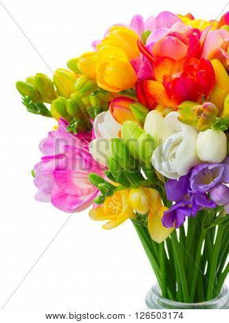 Fresh freesia flowers posy close up  isolated on white background