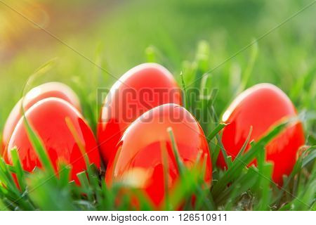 Red Easter Eggs in green grass in spring