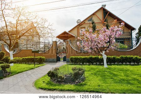 Green Lawn With Bushes And Cherry Tree With Blossom