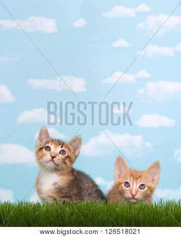Three kittens in tall grass with blue sky background white fluffy clouds. Looking up. Vertical presentation with copy space above