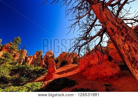 Hoodoos In Red Canyon In Utah, Usa.