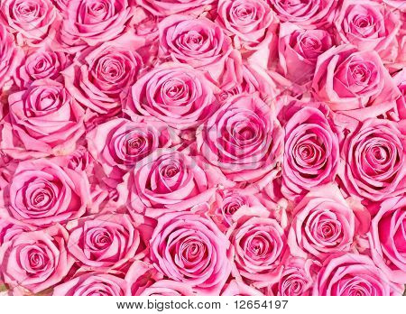 "roses everywhere -  of ""Floral Backgrounds"" series in my portfolio"