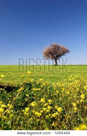 Spring Fields Portrait