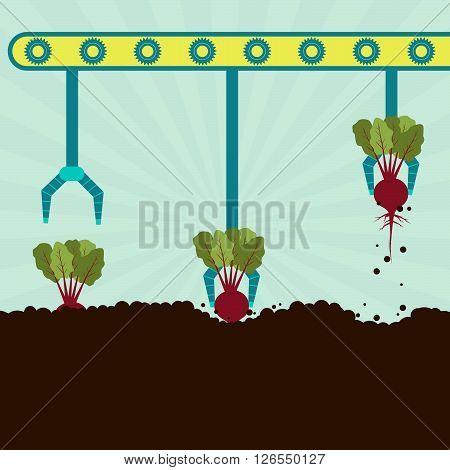 Mechanical Harvesting Beetroot