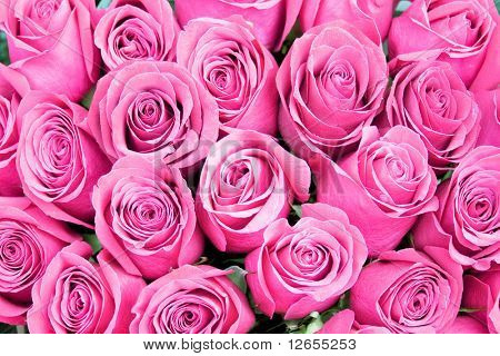 "roses everywhere -  of ""Floral Backgrounds"" multiple series in studioâ??s portfolio"
