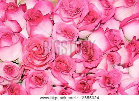 "pink rose petals everywhere - see more of ""Floral Backgrounds"" series in portfolio"