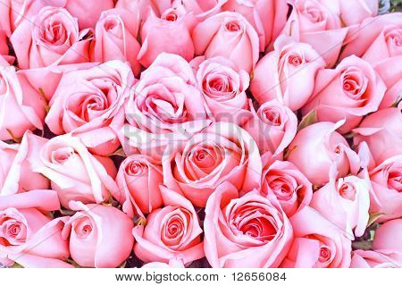 big bunch of multiple pink roses