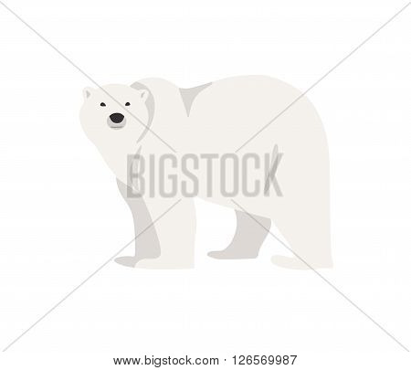 Hand drawn illustration of polar bear isolated on white. Walking or standing polar bear, side view. Flat style