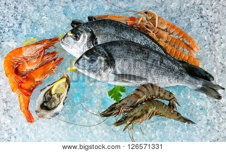 Seafood placed on ice drift