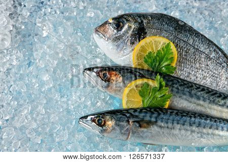 Fish placed on ice drift