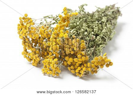 Dried twigs of a herb Tansy - Tanacetum Vulgare or Common Tansy also Bitter Buttons isolated on white background.
