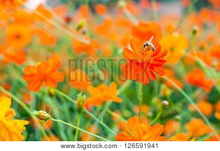 bee suck soft drink from orange flower
