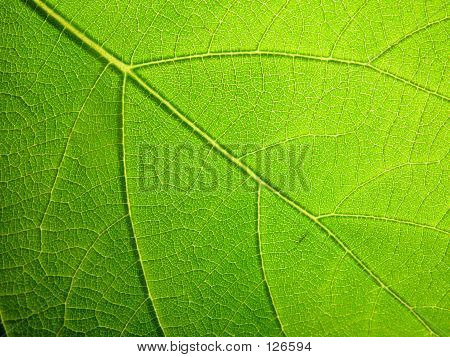 Macro Leaf